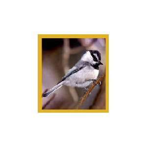 New Magnetic Bookmark Mountain Chickadee High Quality