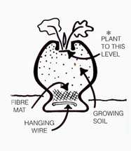 planting and maintenance instructions are included with your pot