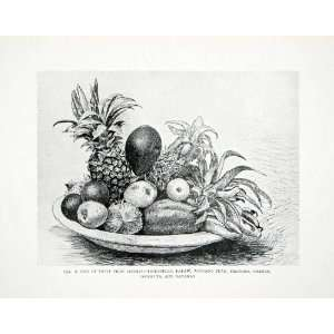 1906 Print Harry Johnston Still Life Art Liberia Africa