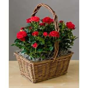 [Discontinued] Rose Garden Basket  Green Gift