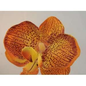 NEW Orange Orchid Hair Pins  Set of 3, Limited. Beauty